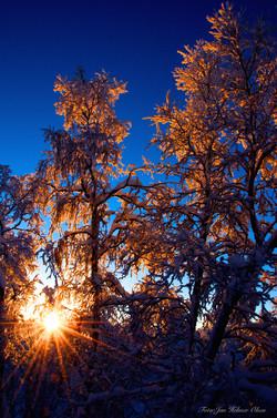 Noen_trær_i_skogen_-)_DSC_0020