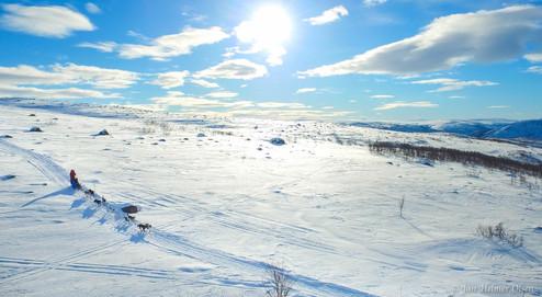 Levajok_på_fjellet.jpg