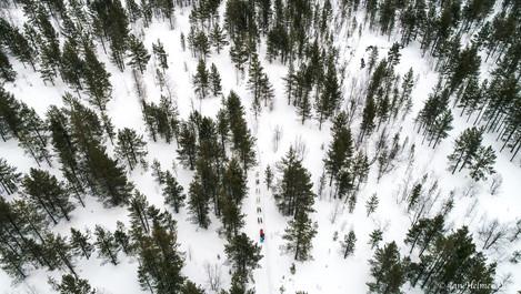 Vaggetem i skogen  _.jpg