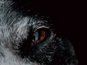 גישת הכוחות, או הזאב שאתה מאכיל: