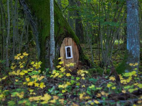 בקתה סודית ביער