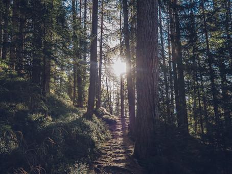 דרך סלולה – קורס העמקה