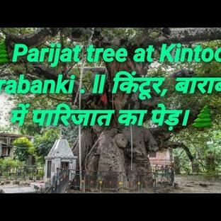 Parijaat Tree, Kintoor, Barabanki, UP