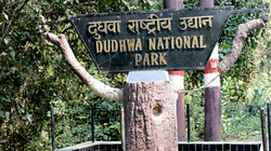 Dudhwa Park near Lucknow in UP