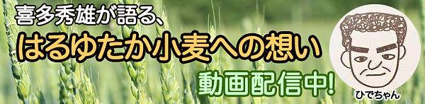 美幌町三雄産業はるゆたか小麦への想い