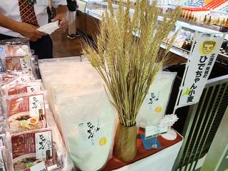 きたキッチンオーロラ店にて「ひでちゃん小麦生冷や麦」など販売
