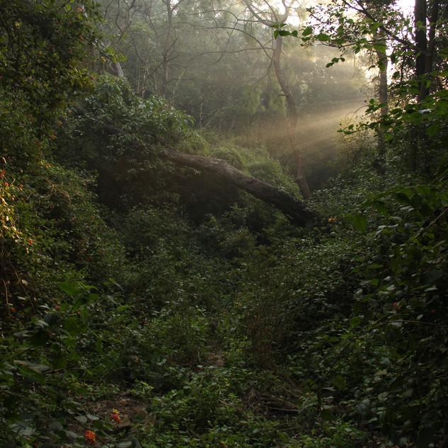 Kukanet forest, Hoshiarpur