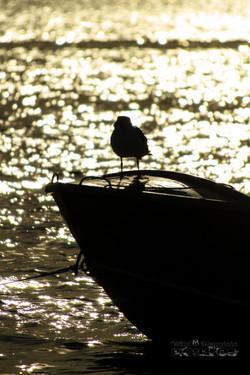 Baird Bay_09