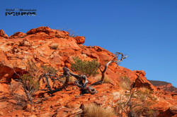 Root in the Outback