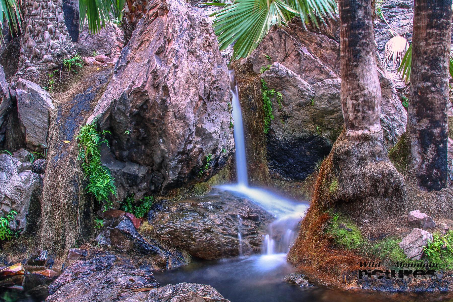 Zebeedee Springs