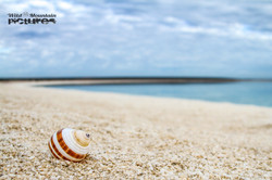 Shell Beach_10