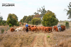 Jackaroos at Cattle Drive