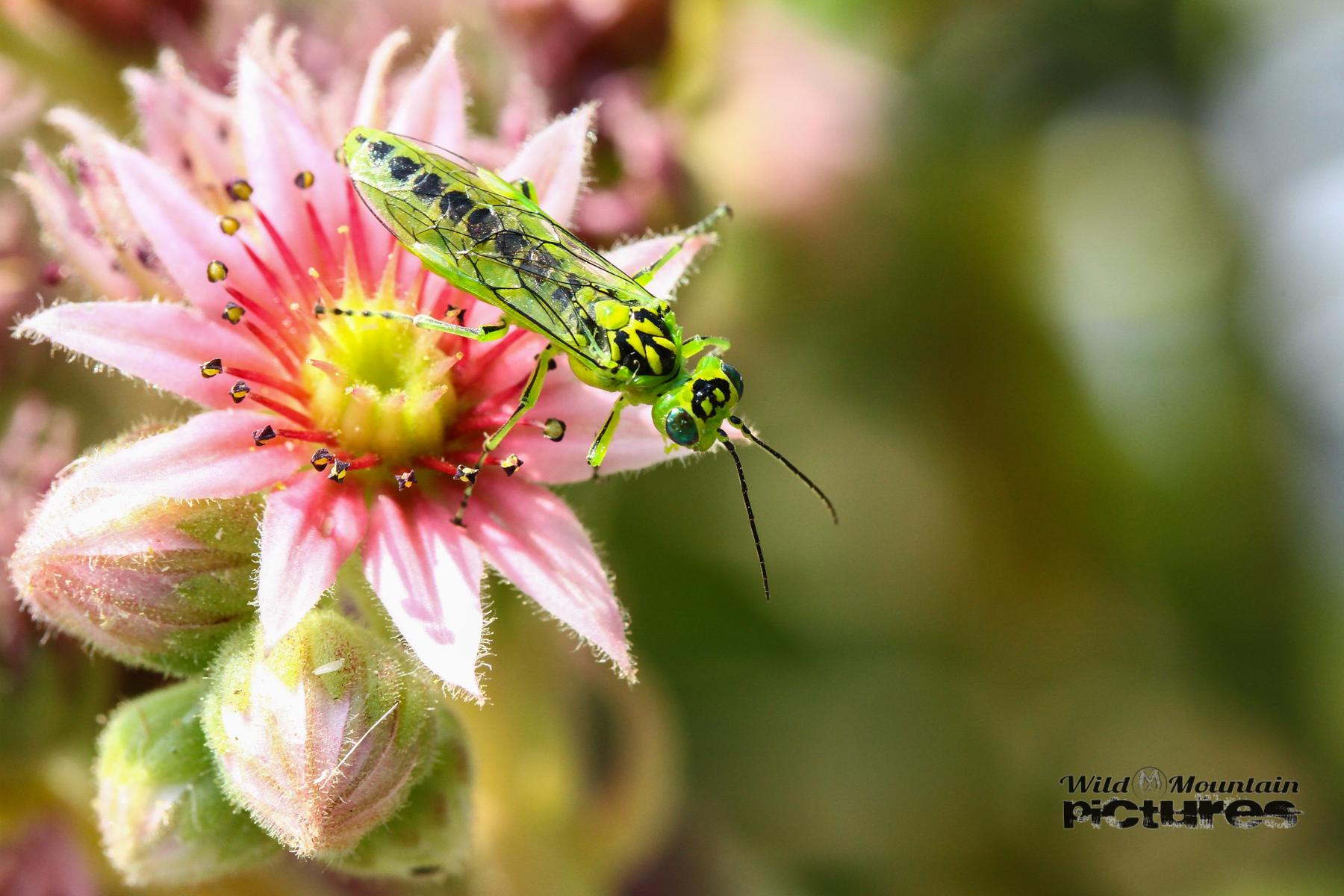 Insekt Auf Kleiner Blüte