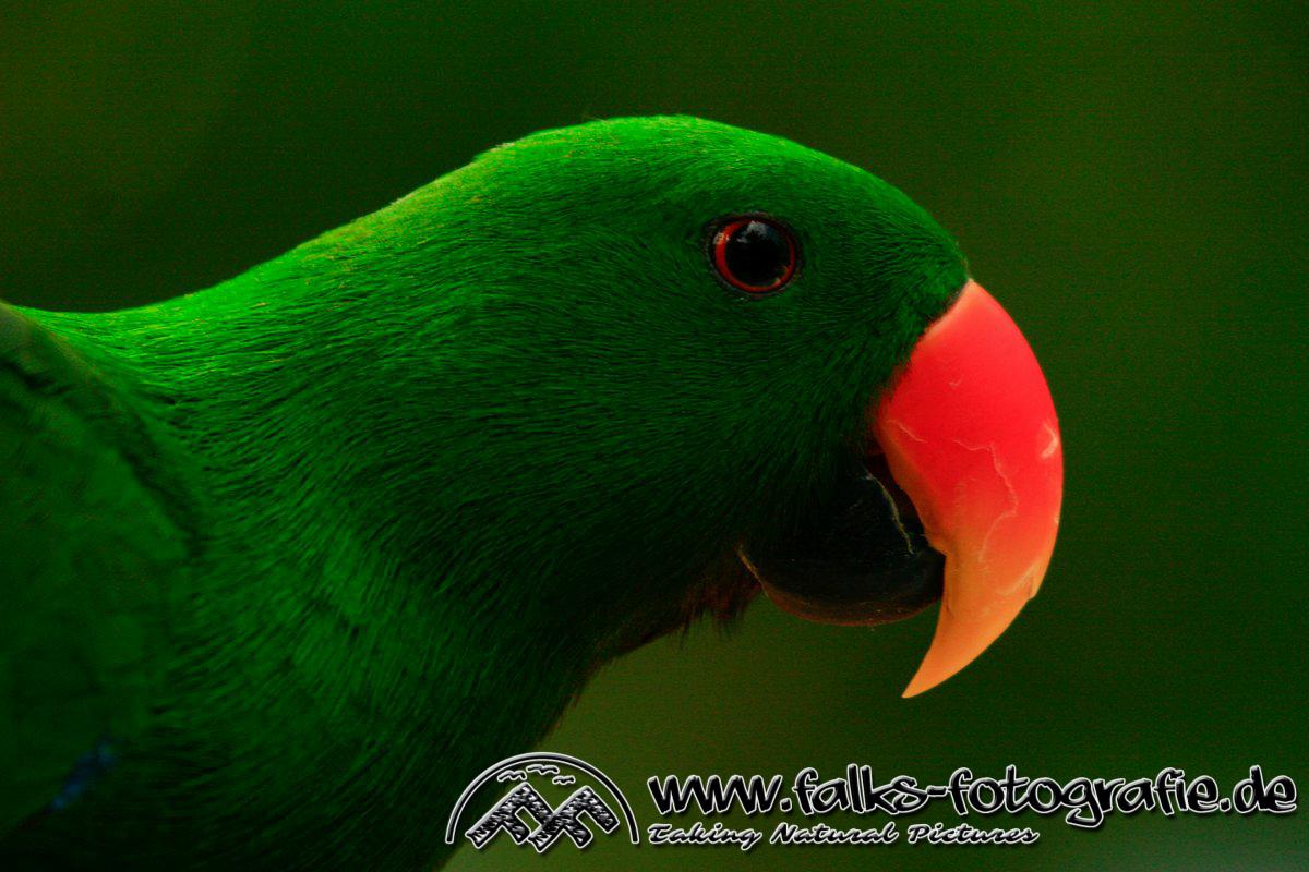 Diverse_Vögel-_Rainforrest_Habitat