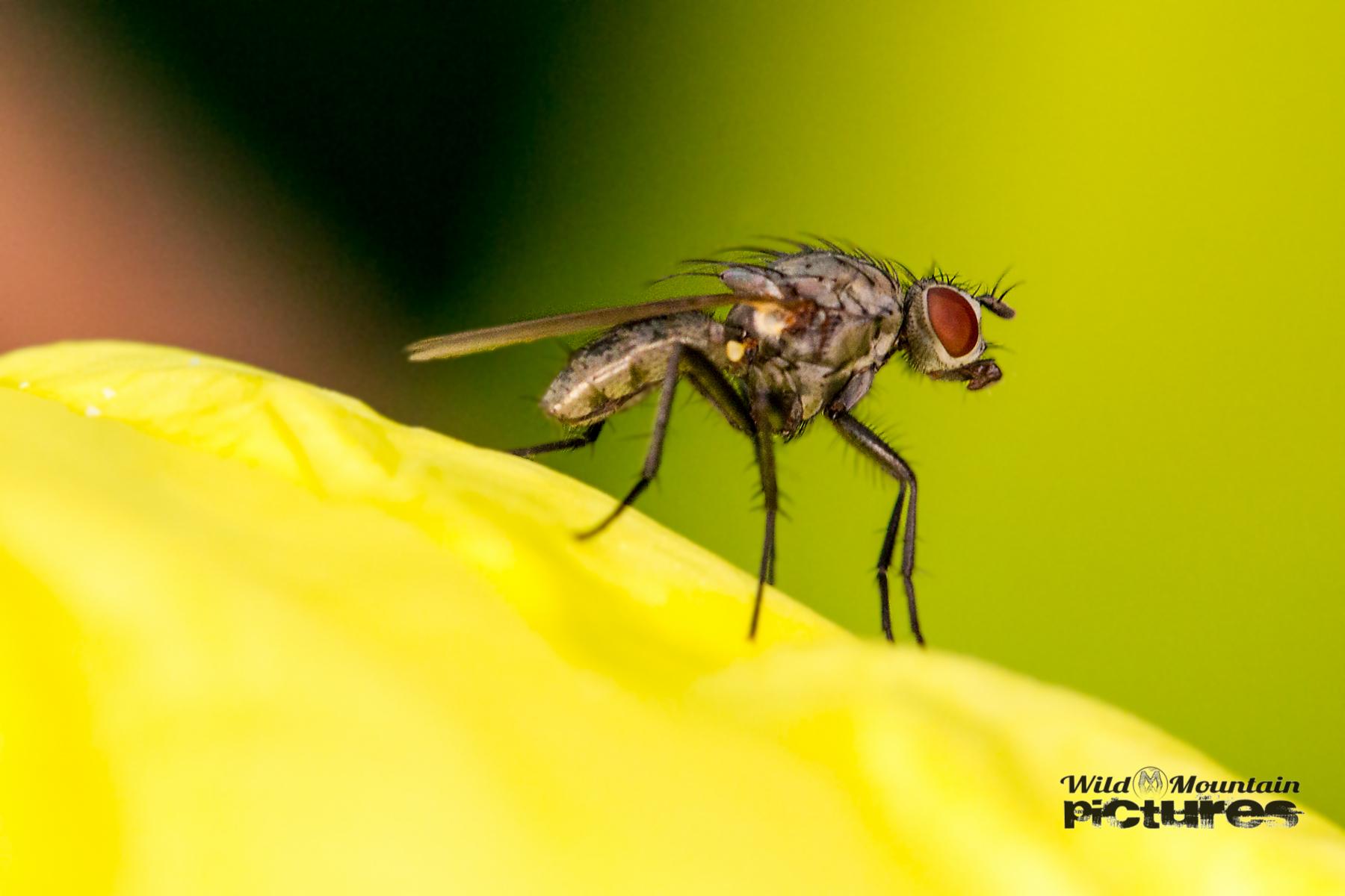 Fliege Vor Grünem Hintergrund