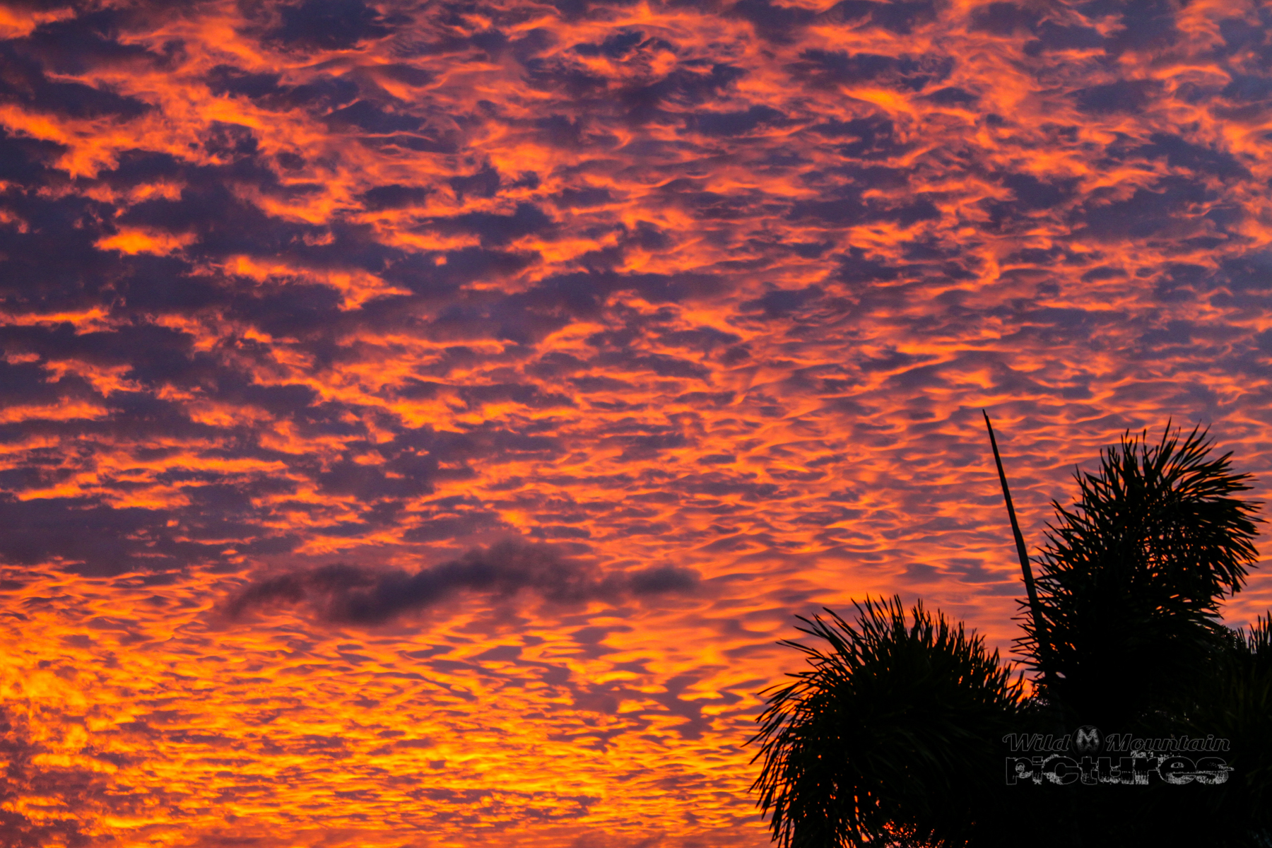 Sunset with Palms 2