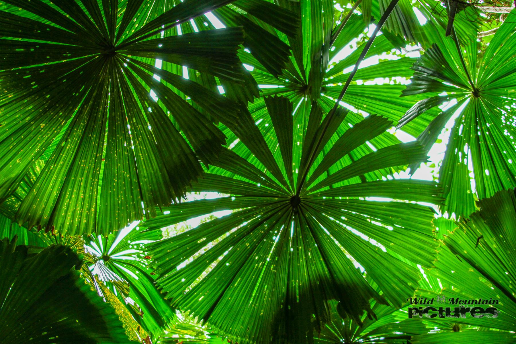 Rainforest Daintree NP