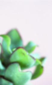 Torie%20Challenor%20-%20img005_edited.jp