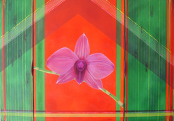 Meir Solomon dendrobium s, 70x100 cm, 2011