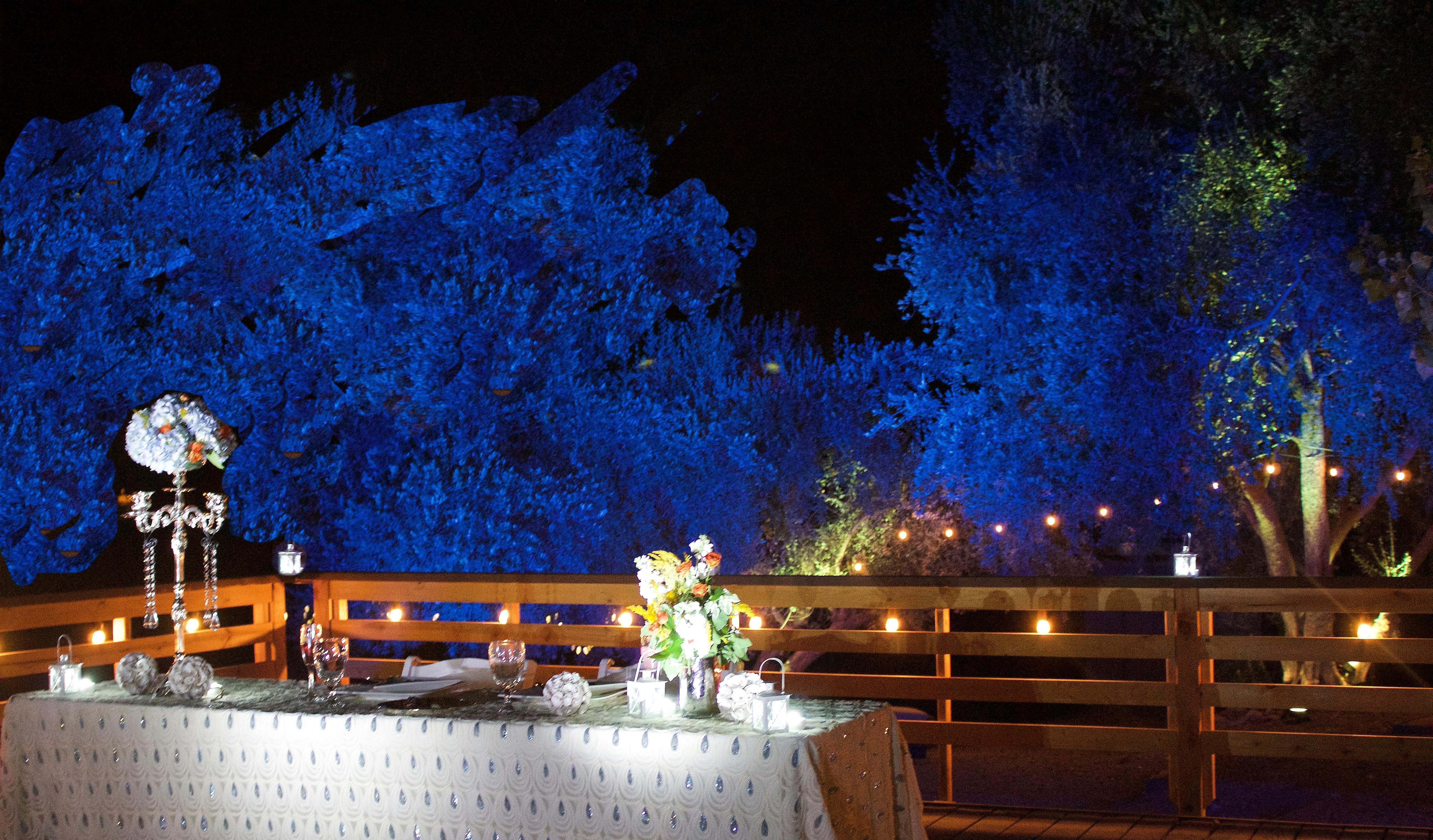 Bluetreescloser.jpg