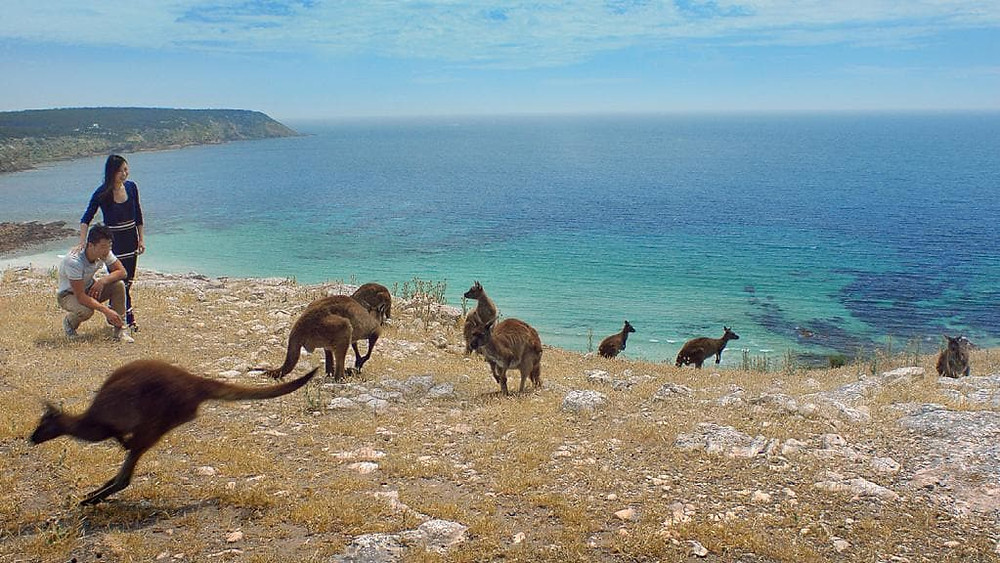 Kangaroo Islands