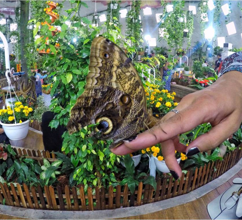 Butterfly-Garden8