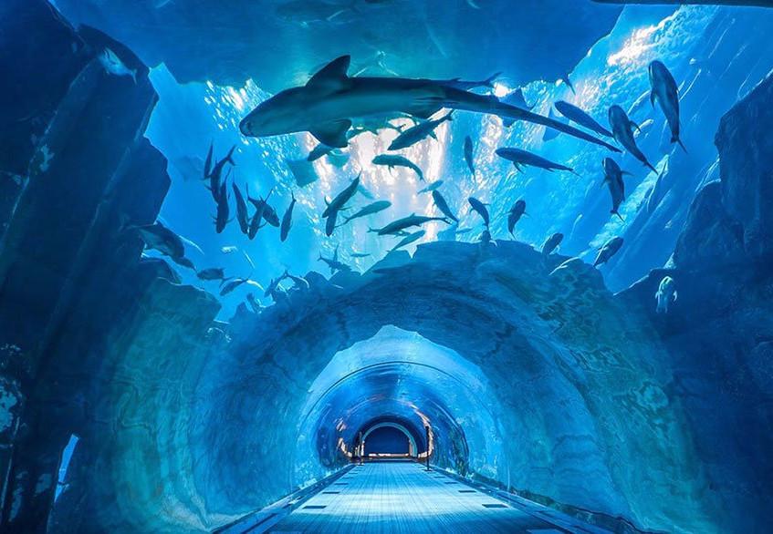 aquarium.jpg2