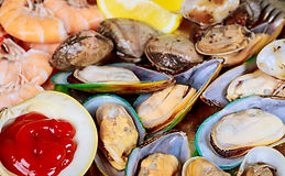 green-lipped-mussel