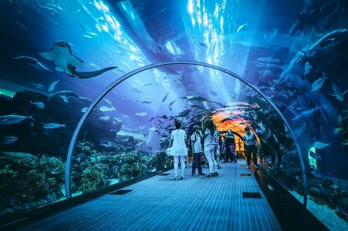 cover-for-aquarium-in-dubai