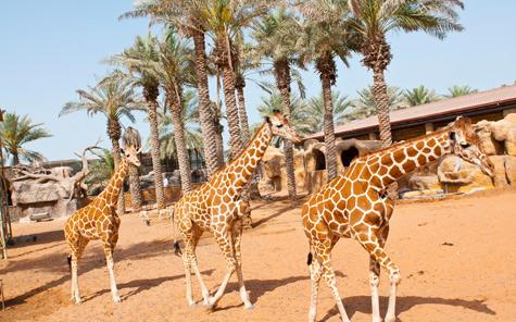 emirates zoo