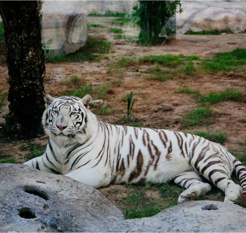 Emirates-Park-Zoo
