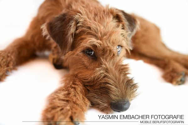 Hundeportrait von Yasmin Embacher Fotografie