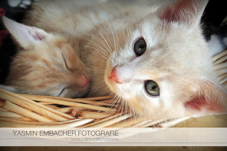 Katzenportrait von Yasmin Embacher Fotografie