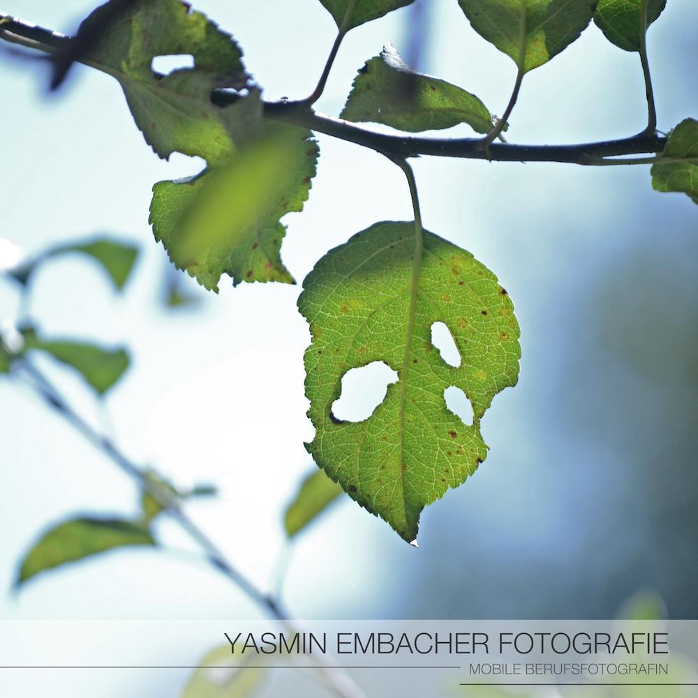 Blatt_ Yasmin Embacher Fotografie