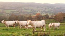 Vente directe viande bio