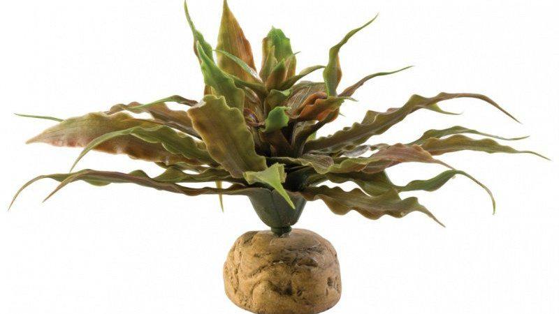Exo-Terra Desert Star Cactus Terrarium Plant