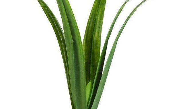 Exo Terra Pandanus Smart Terrarium Plant