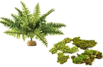 floranmoss.png