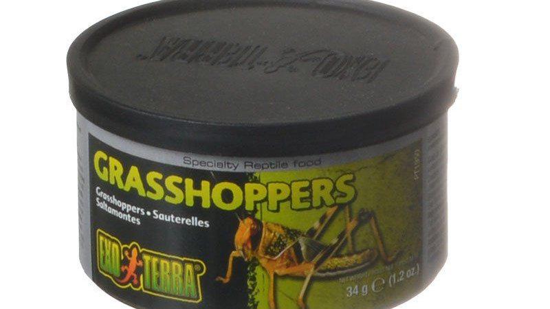 Exo-Terra Grasshoppers Reptile Food