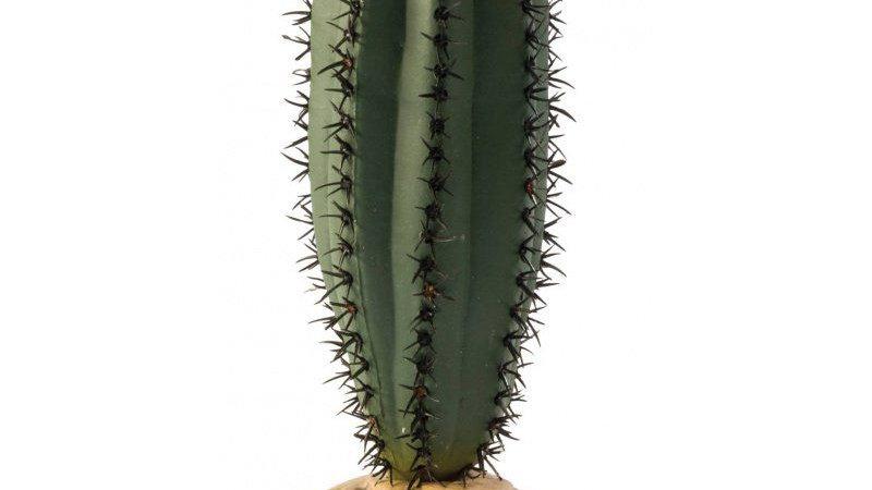 Exo-Terra Desert Saguaro Cactus Terrarium Plant