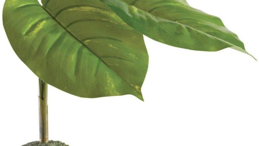 Exo Terra Scindapsus Smart Terrarium Plant