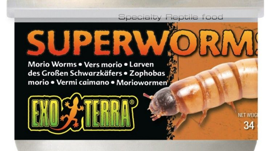 Exo Terra Canned Superworms Specialty Reptile Food