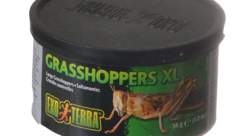 Exo-Terra Grasshoppers XL