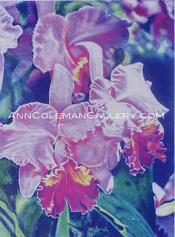 Cataleya Orchid