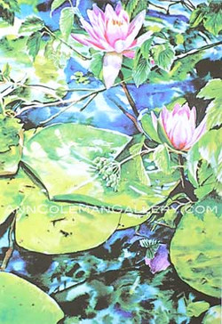 Two Waterlillies