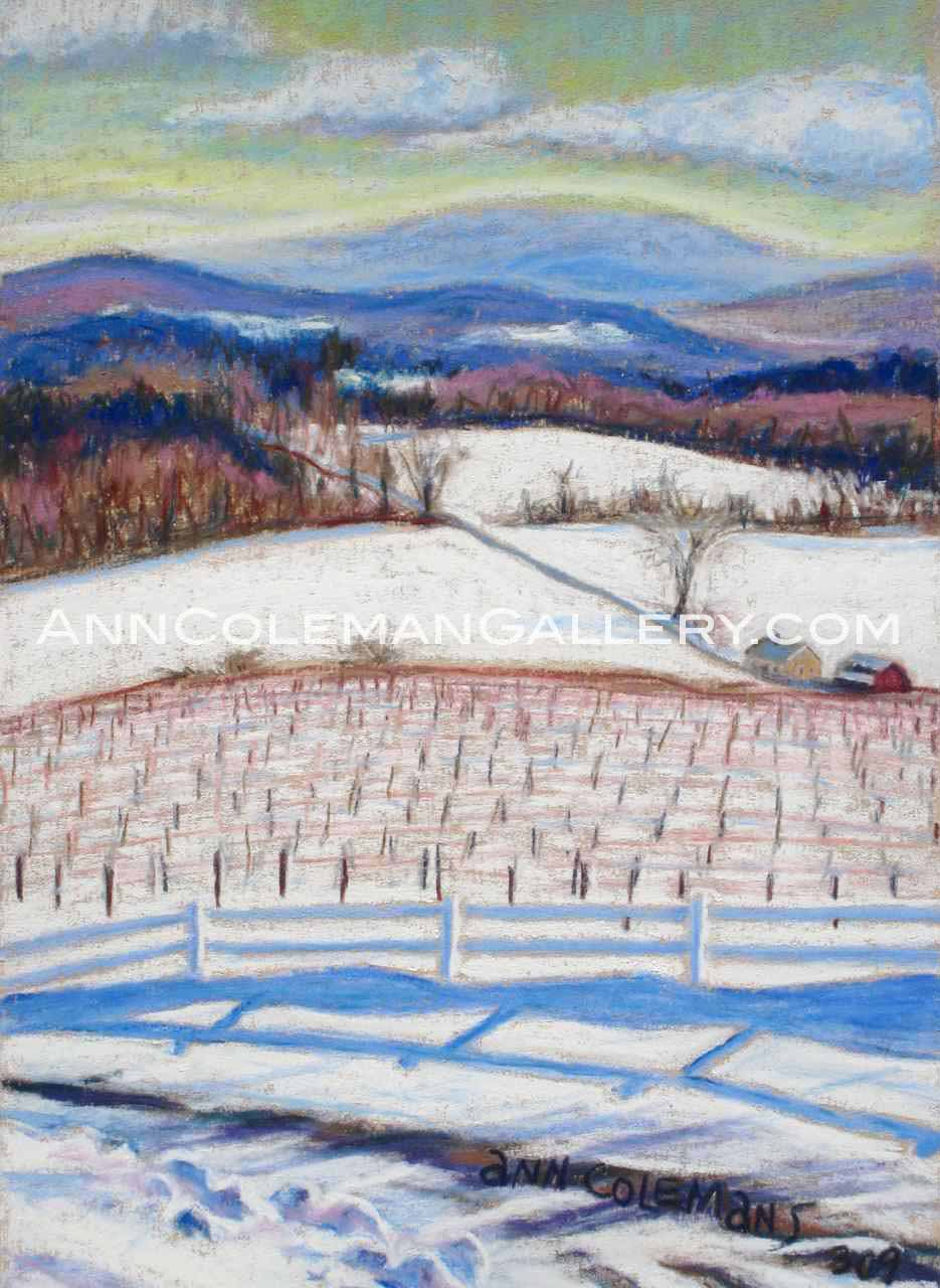 Vineyard: Winter