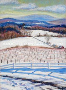 Vineyard: Winter