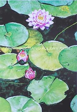 Three Waterlillies
