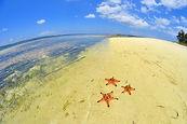 starfish-998814_1280.jpg