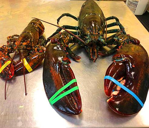 LOTSA LOBSTER - Lobsters-big-and-small.jpg